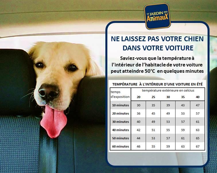 Protégez votre animal de la chaleur en été